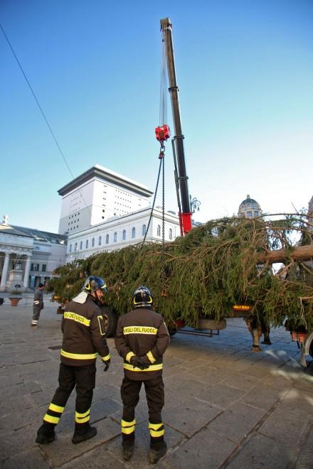 L 39 albero di natale sopravviver riciclato nelle aiuole for Giardinieri genova