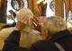 scultura tattile in mostra a Palazzo della Borsa
