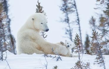 Mamma orsa e orsetto, ©Ph. Marco Urso